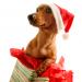 santa-puppy