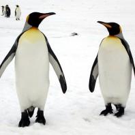 15798589947_7b6d029ae8_penguin